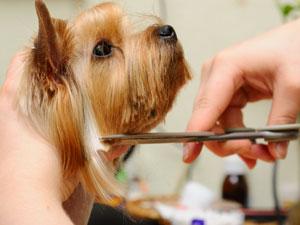 Dog Hair Shed Pal Reviews